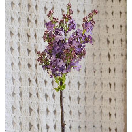 Anglický šeřík světle fialový, 83 cm